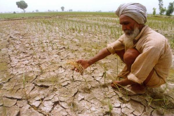 Punjab Cabinet approves crop loan waiver
