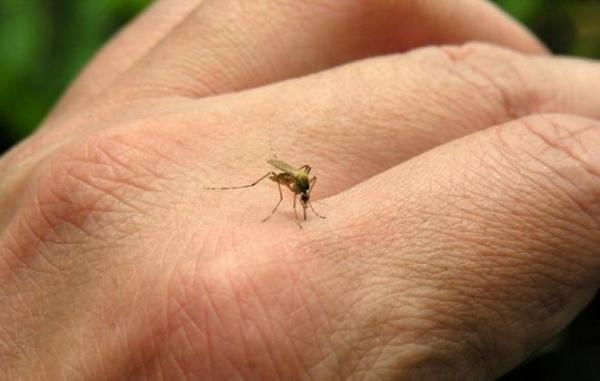 Can mosquito repellents keep dengue mosquitoes at bay?