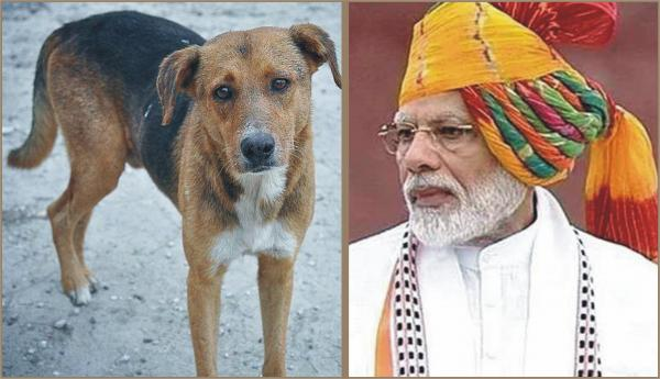 An open letter from Stray Dogs to the Prime Minister