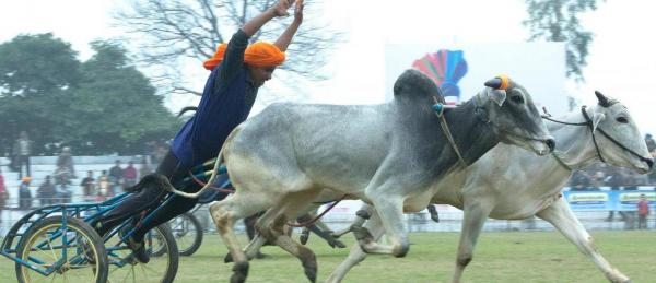Punjab's Rural Olympics on Deathbed?