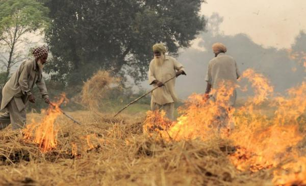 PPCB appeals to farmers not to burn paddy straw in larger public interest